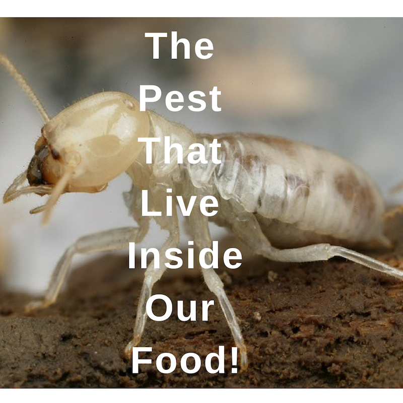 pest that live inside our food