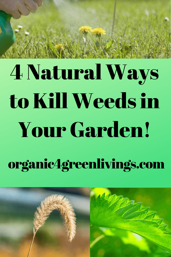 Natural weed killers for your garden