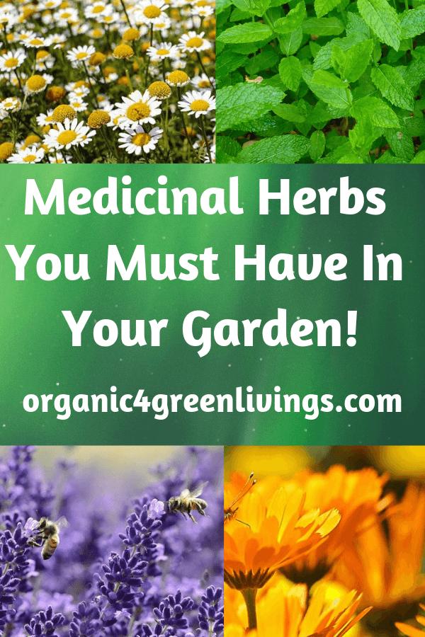 Medicinal Herbs for your garden