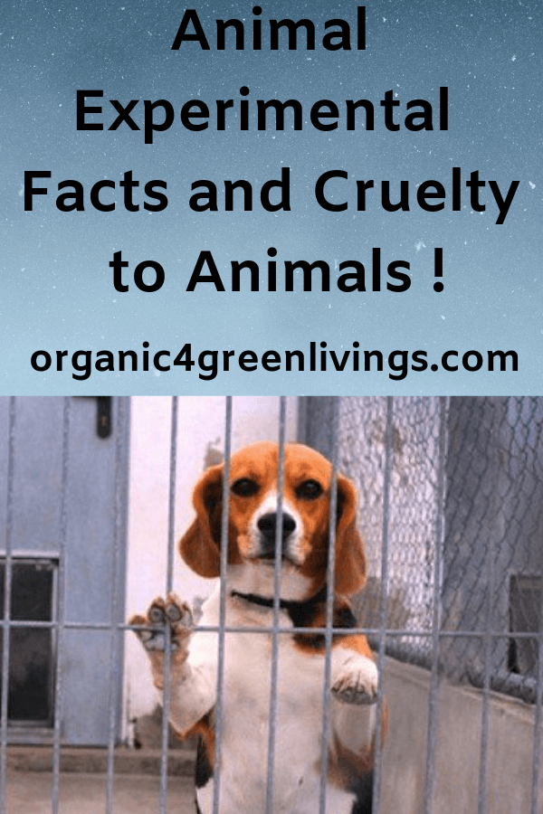 Animal experimental facts