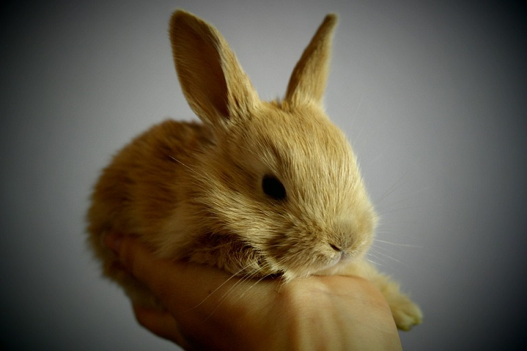 Facts about animal experimentaion