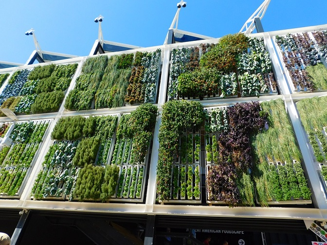 How to take care of vertical garden