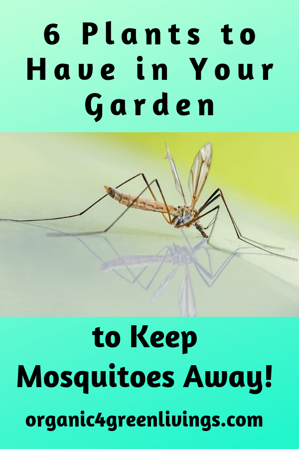 plants that keep mosquitoes away