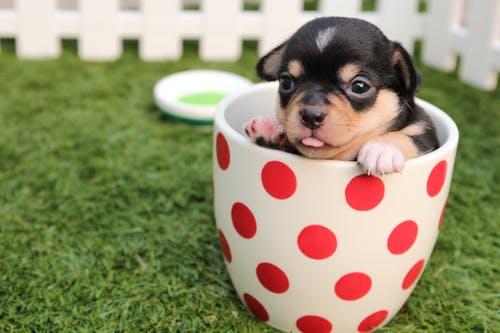 pet hygiene tips