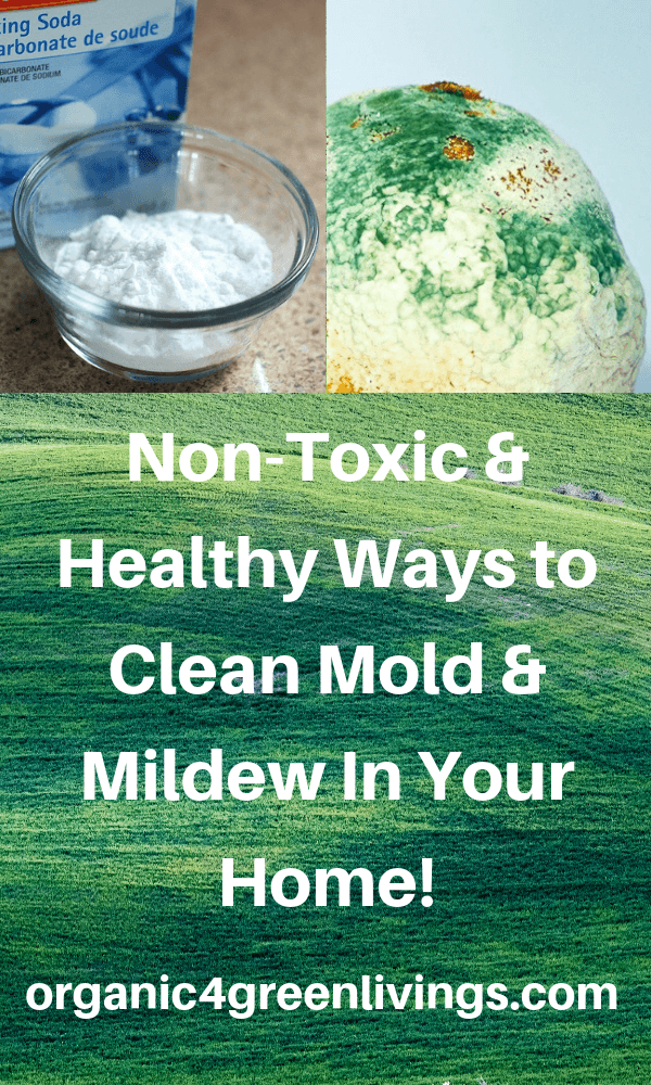 areas where mold can be found in your home