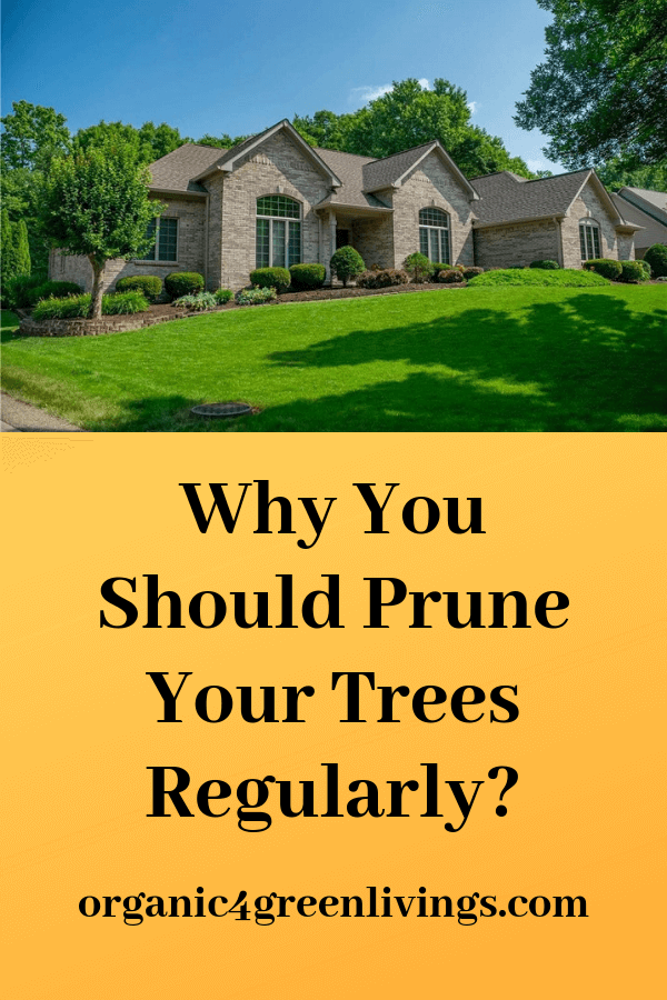 why prune your trees
